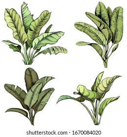 Set of large tropical leaves. Hand drawn vector illustration. Isolated element for design.