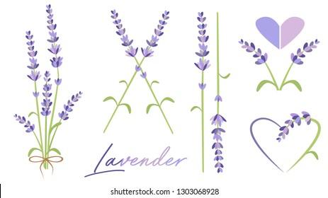 Set of lavender flowers. Lavender twig. Flower vector
