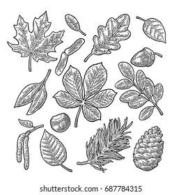 Set leaf, acorn, chestnut and seed. Vector vintage black engraved illustration. Isolated on white background