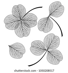 Set leaf clover . Vector illustration. EPS 10