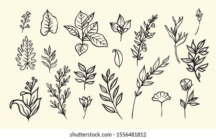 set of leaf and flower vector illustration, floral hand drawn lineart collection for vintage and romatic design