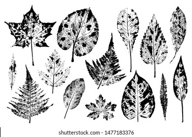 Set of leaf prints. Autumn herbarium stamps leaves of trees and herbs: nettle, lily of the valley, ferns and others. Overlay template. Vector illustration