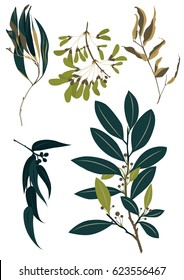 set leaf vector. collection of leaves,Line borders,collection of leaves,Chalkboard Style Hand Drawn Laurels,Plants icons,Icons of leaves,Vector leaves icon set on white background, Leaf vector