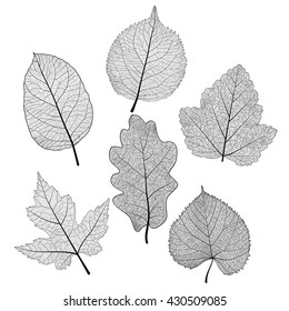 Set leaves of black on white. Vector illustration. EPS 10.