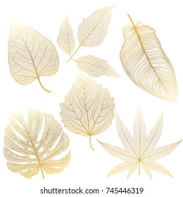 Set leaves of colored on white. Vector illustration.