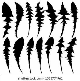 Set of leaves dandelion.