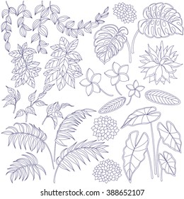 Set of leaves and flowers. Contoured image  of tropical plants. Floral elements for coloring.