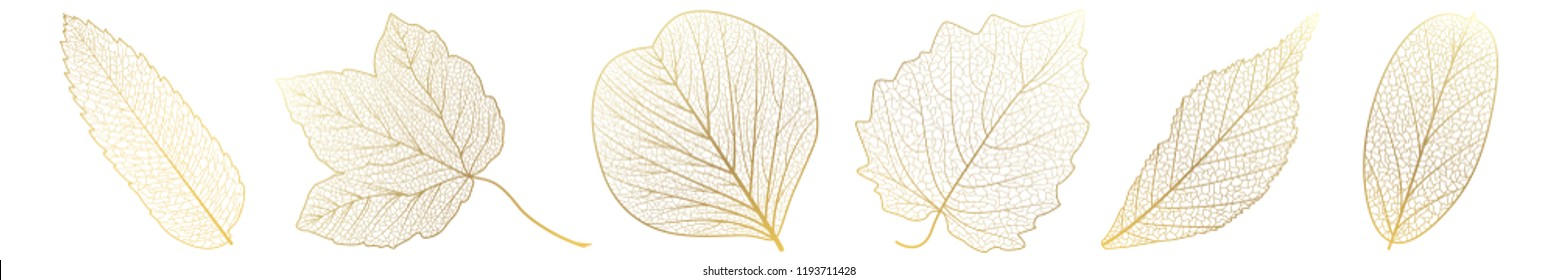 Blätter aus Gold auf Weiß setzen.  Vektorgrafik.