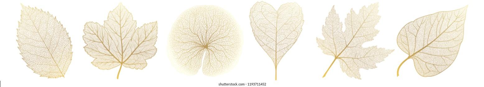 Set leaves of gold on white. Vector illustration.