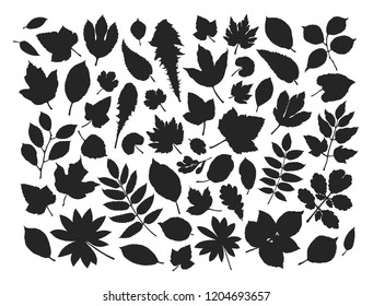 Set leaves and grass. Nature concept. Silhouette vector illustration