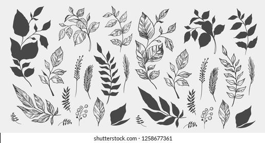 Et sett med blader. Håndtegnet dekorative elementer. Vektor illustrasjon
