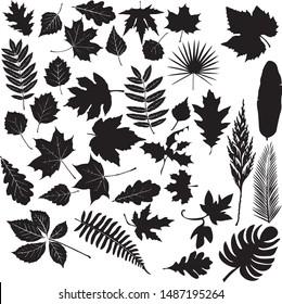 set of leaves silhouette. Eps 10