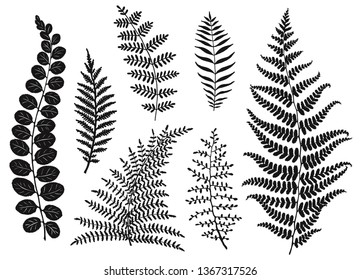 Set of leaves silhouettes, hand drawn vector illustration.