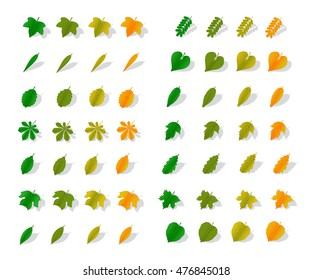 A set of leaves of various trees from green to orange with shadow