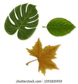 Set of leaves. Vector illustration