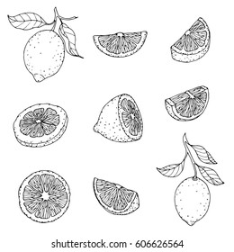 A set of lemons, fresh pieces, hand drawing, vector illustration on white background for packaging.