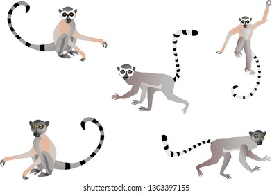 Set of lemurs in different poses isolated on white vector illustration