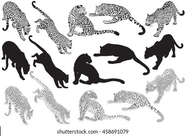 Set of leopard on a white background, vector Illustration