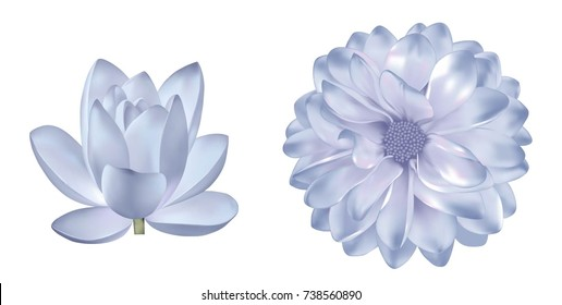 Set of light blue purple flowers: spring dahlia or Gerber flower. Isolated on white background. illustration of lotus lily flower