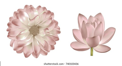 Set of light pink red flowers: spring dahlia or Gerber flower. Isolated on white background. illustration of lotus lily flower
