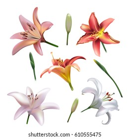 Set of lilly flowers Isolated on White Background. Vector clip-art
