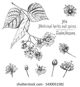 Set of Linden blossom hand drawn patterns with flowwer, lives and branch in black color on white background. Retro vintage graphic design Botanical sketch drawing, Vector illustration.