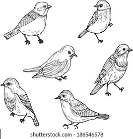 set of line drawings of birds, ink drawing, hand drawn vector illustration