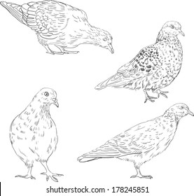 set of linear drawing doves, hand drawn vector illustration