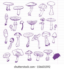 Set of linear drawing mushrooms, vintage vector illustration
