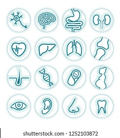 Set of linear icons - organs or specialties of medicine - health, business, internet, web design