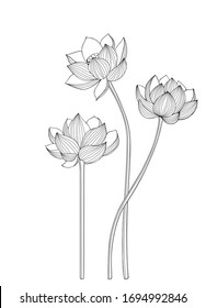 Set of Lotus flowers for greeting cards, invitations and packaging. Windscreen design.