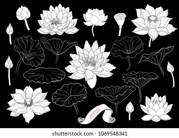 Set of lotus silhouettes . Linear vector drawing of lotus flowers, buds and leaves. Isolated elements in sketch style.