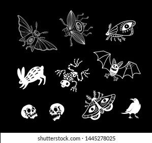 Set of magic illustrations. Animals, insects and skeletons. Witch kit. For Halloween and more.