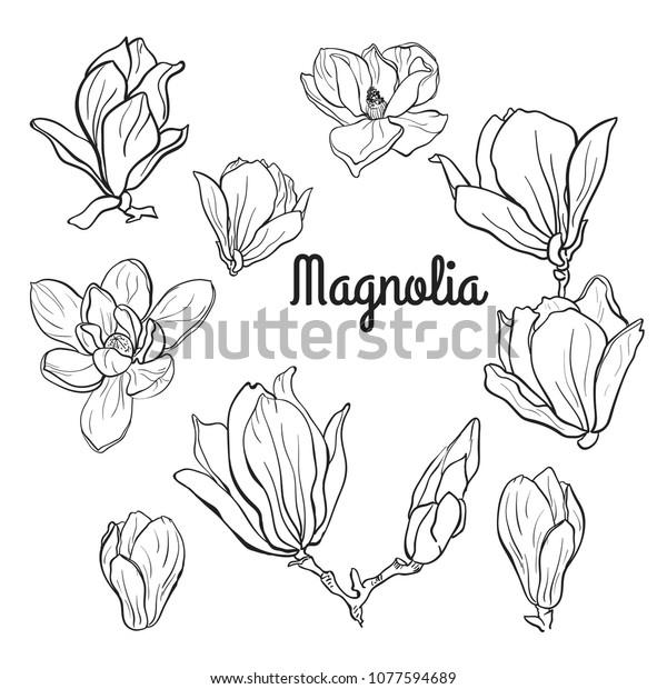 Set Magnolia Flowers Black White Line Stock Vector Royalty Free