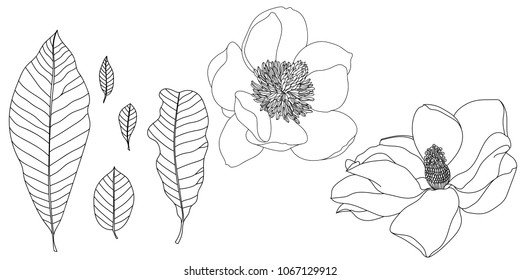 A set of magnolia flowers and magnolia leaves. Black and white line illustration of magnolia flowers on a white background.
