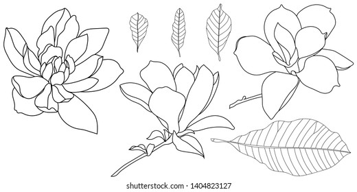 A set of magnolia flowers and magnolia leaves. Black and white line illustration of magnolia flowers on a white background