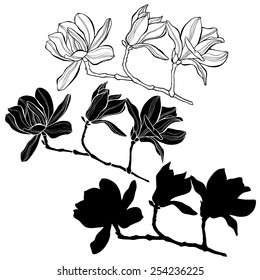 Set of magnolia isolated on white background. Hand drawn vector illustration, sketch. Elements for design.