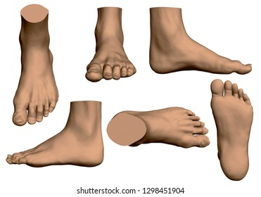 Set with male feet. Realistic in different positions. Vector illustration.