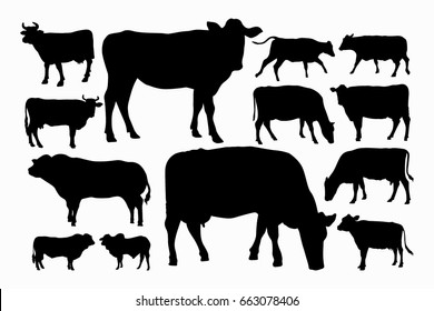 Set Male and female cow silhouette collection