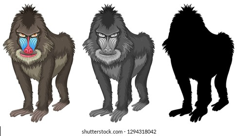 Set of mandrill baboon character illustration