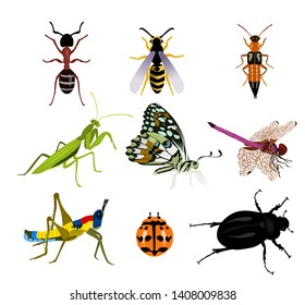 Set of many beautiful insects on a white background