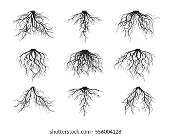 Set of many different black Roots. Vector outline Illustration.