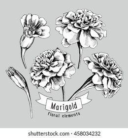 Set of a Marigold flowers elements. Vector black and white illustration.