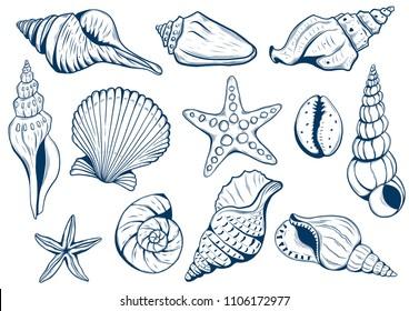 set of marine theme. Sea shells. different seashells on white background color navy peony. starfish. Vextor illustration Sketch style