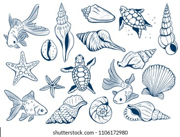 set of marine theme. Sea shells. different seashells on white background color navy peony. starfish and turtle and goldfishes. Sketch style