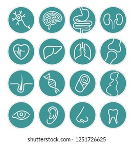 Set of medical icons - organs or specialties of medicine - Health, business, internet, web design