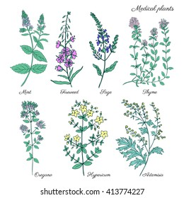 Set of medical plants Mint, Chamerion, fireweed, willow herb, Sage, Thyme, Oregano, Hypericum, Artemisia absinthium, wormwood hand drawn vintage sketch vector isolated on white, Doodle Healing herbs