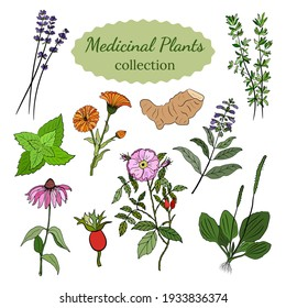 A set of medicinal herbs and plants. Collection of hand drawn flowers and herbs. Botanical plant illustration. Vintage medicinal herbs sketch.