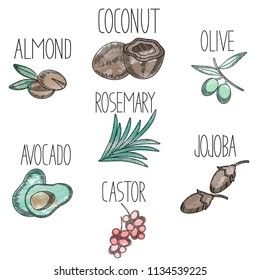 Set of medicinal plants and fruits avocado,castor,jojoba,olive,coconut,almond,rosemary in sketchy watercolor style. Icons for medical and beauty products logo,flyer,banner,branding . Vector cosmetic
