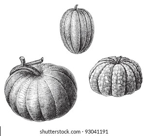 Set of melons - vegetable / vintage illustration from Meyers Konversations-Lexikon 1897